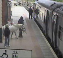 Austrian man tries to board train with horse