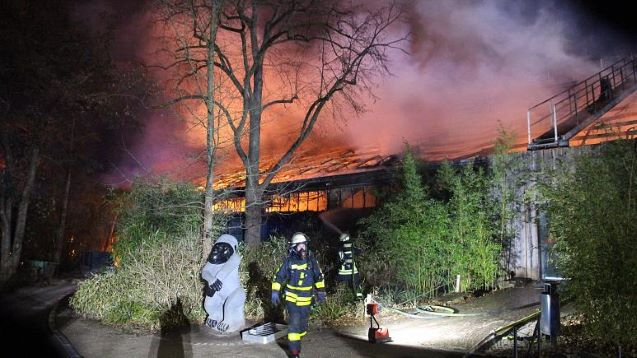 Massive blaze at German zoo leaves more than 30 animals dead