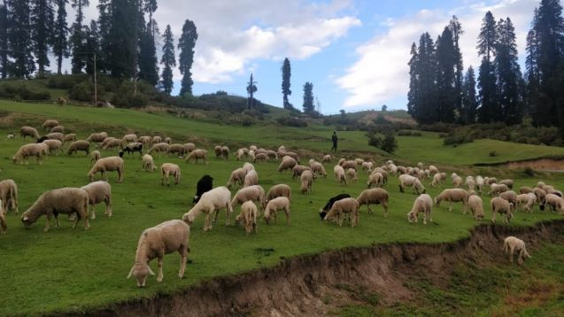 Kashmir Govt Declined Offert To Sell Pattan Land To Army
